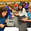 บทความ : นักเรียนระดับชั้นประถมปีที่ 3 ของโรงเรียน Bronxville ได้ทำการเรียนรู้ธรรมชาติ ด้วยการศึกษากุ้งเครย์ฟิช