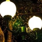 แสงสีอะไร ล่อแมลงเข้าบ้าน อยากรู้มั้ย