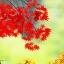 CX02_PEK ปักกิ่ง-กำแพงเมืองจีน-เทศกาลใบไม้เปลี่ยนสีเขาเซียงซน 5 วัน 4 คืน ต.ค.-พ.ย.59 thumbnail 1