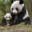แอ่วเจียงใหม่ ชมหมีแพนด้า 3 วัน 2 คืน thumbnail 1