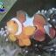 ระยอง- อะแควเรียมสัตว์น้ำทะเล 2 วัน 1 คืน thumbnail 1