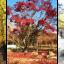 THREE COLOR LEAVES IN KOREA 5D3N (XJ) ต.ค-ธ.ค.60 thumbnail 6