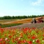 Beautiful Hokkaido ทัวร์ฮอกไกโด 6วัน 4คืน พ.ค. - ต.ค.61 thumbnail 14